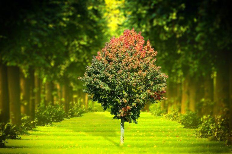Guardiamoci intorno e ringraziamo per le bellezze che abbiamo: Giornata Mondiale dell'Ambiente